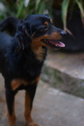 Beatiful Dog Beatiful View Black Dog Dog From M Dog Philoso Dog Thinking Dog Thinking Of Life Little Dog Model Dog My Year My View Perro Ratero De Mallorca Pretty Dog Small Dog