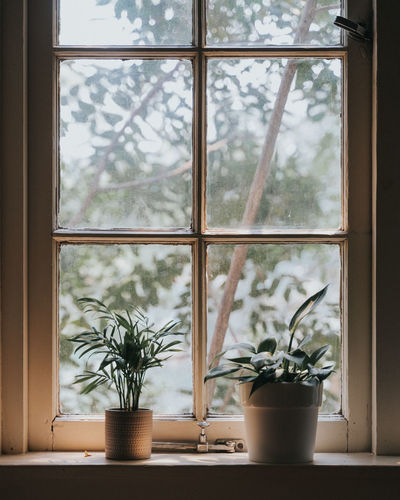 Close-up of potted plant on window sill at home