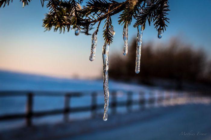 Wasserkuppe Eis Eiszapfen Schnee Snow Winter Wasserkuppe