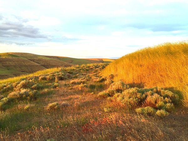 43 Golden Moments landscape Eastern Washington Natural Light Stillness Serenity Everyday Emotion Setting Sun Nature