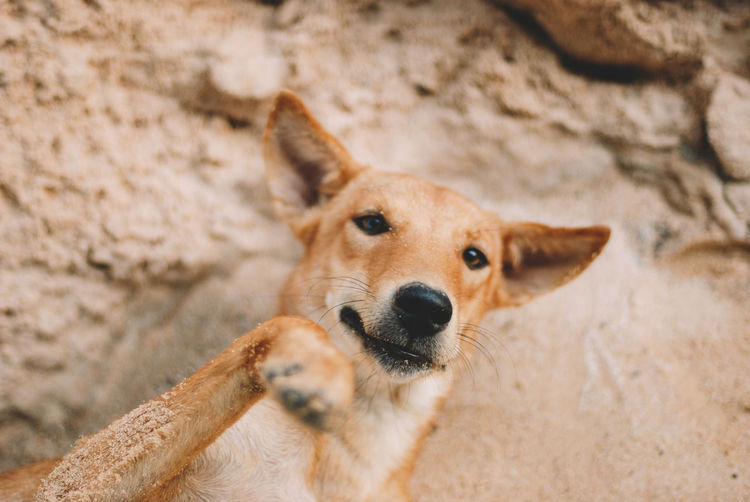 One Animal Mammal Animal Themes Animal Domestic Pets Canine Dog Domestic Animals Vertebrate No People Portrait Looking At Camera Animal Body Part Day Focus On Foreground Brown Solid Rock - Object Close-up Animal Head