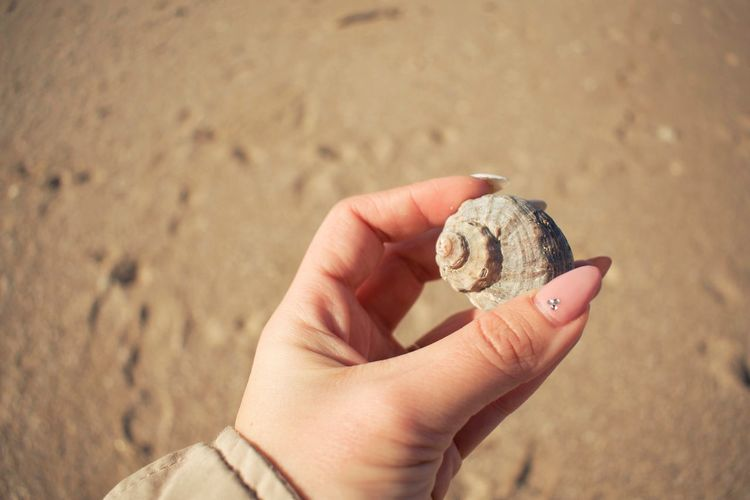 EyeEm Selects Beach Sand Human Hand Human Body Part One Person Real People Holding Shore Nature Outdoors Seashell Sea Life Day Summer Exploratorium