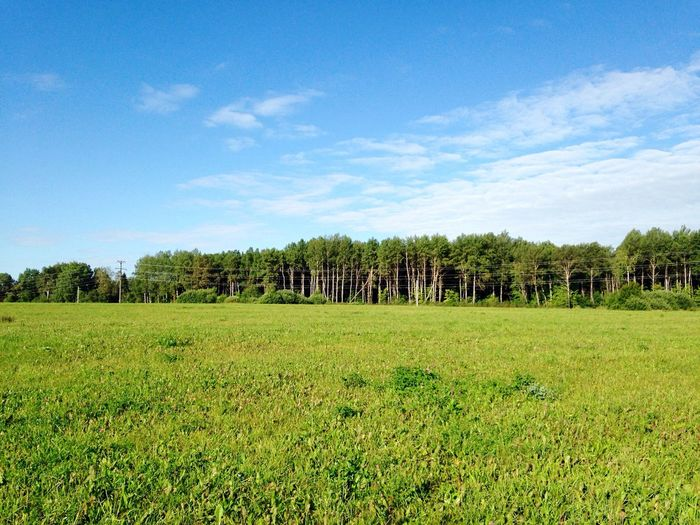 Tree Sky Grass Forest Field Outdoors Green Russia