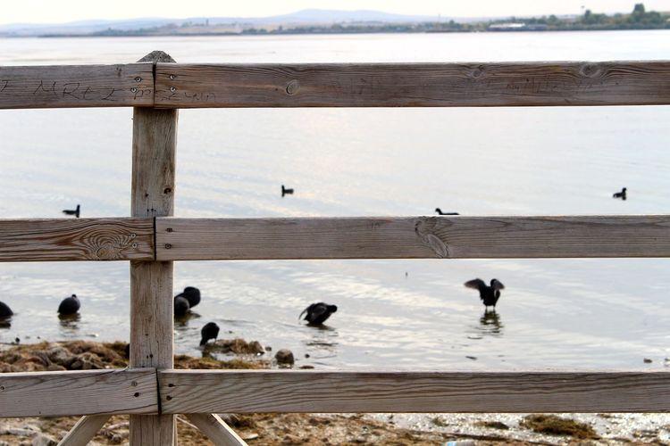 Duck Fence Wood Fence Wood EyeEm Selects Bird Water Lake Reflection Summer Road Tripping The Traveler - 2018 EyeEm Awards The Great Outdoors - 2018 EyeEm Awards 10