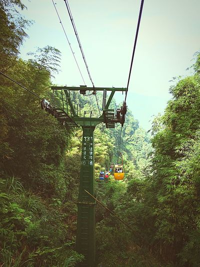 Check This Out Shunanzhuhai Funicular Green Nature Yibin Sichuan China Summer Days Sunny Day Bamboo Sea Traveling