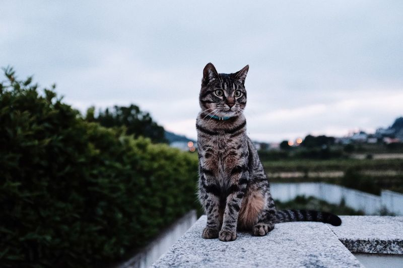 Portrait Of Cat Sitting On Retaining Wall Against Sky