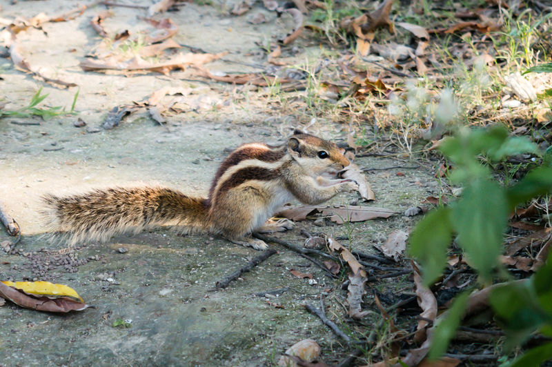 View of squirrel on land