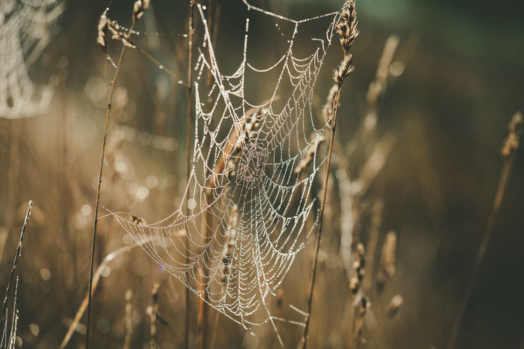 Spider Web Fragility Focus On Foreground Close-up Vulnerability  Nature Plant No People Day Beauty In Nature Outdoors Water Growth Spider Complexity Selective Focus Animal Themes Animal Tranquility Web