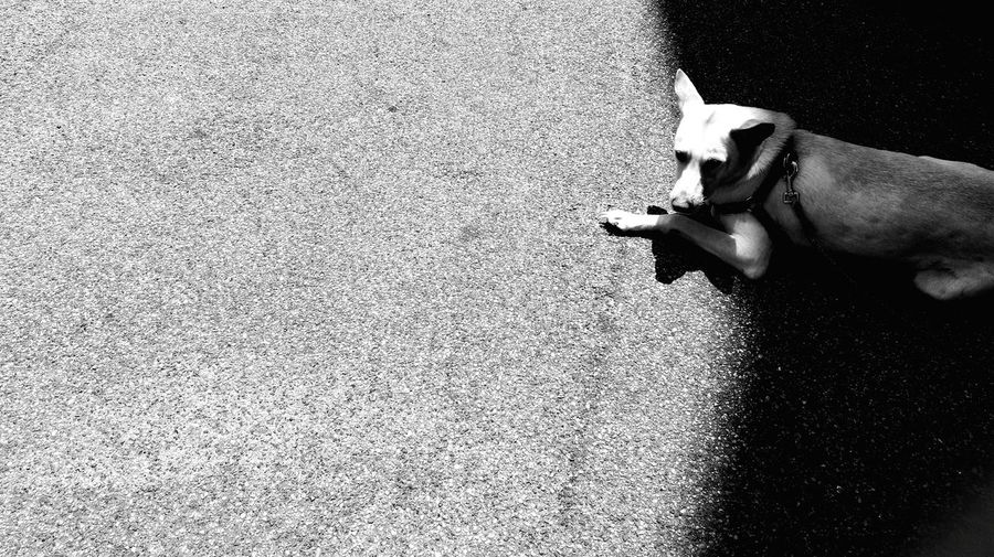 Dog Enjoying The Sun Notes From The Underground Playing With The Animals Stray Dog Black And White Streetphotography Streetphoto_bw Rule Of Thirds Looking Into The Future