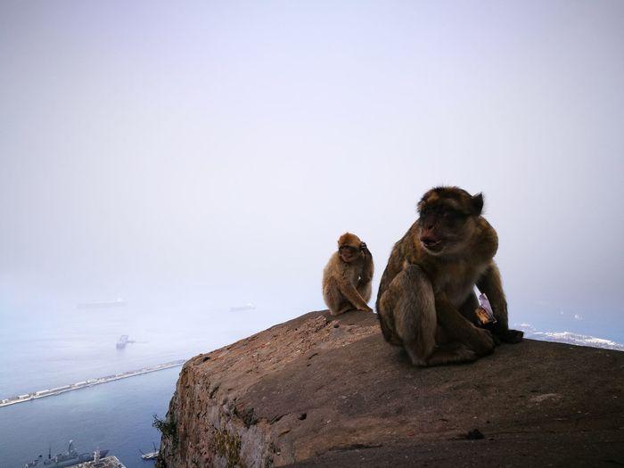 EyeEm Selects Monkeys Sanctuary