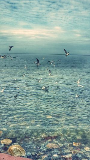 Birds_collection EyeEm Best Shots EyeEm Sea And Sky Walking Around OpenEdit Deniz Marti Good Morning Hi!