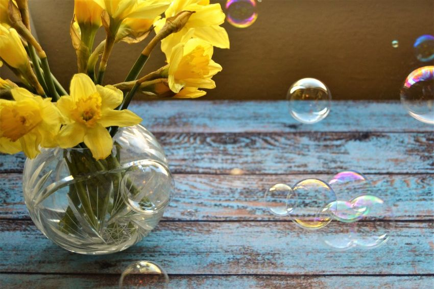 narcissus an a vase surraunding by bubbles, so fragile and beautiful Adorable Beauty In Nature Blue Table Bubbles Close-up Day Flower Flower Head Fragility Freshness Freshness Indoors  Jar Joy Narcissus Nature No People Petal Spring Still Life Table Tea Light Warmth Water Yellow Flowers