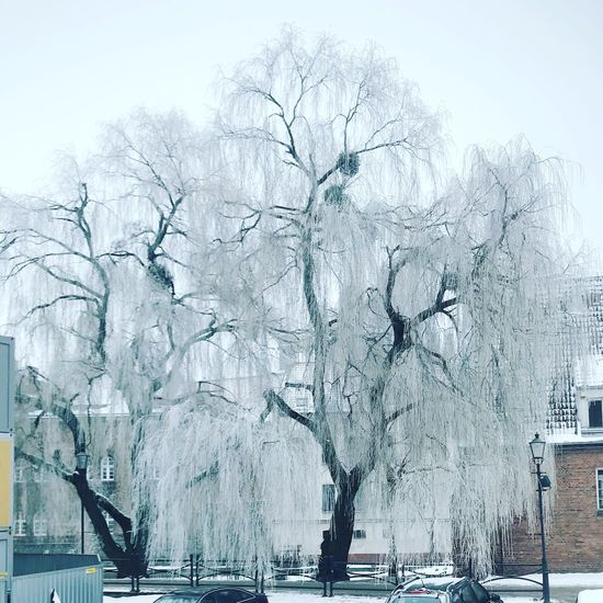 EyeEm Best Shots EyeEm Nature Lover EyeEmNewHere Cold Temperature Winter Snow Bare Tree Nature Frozen Tree Outdoors Ice Day Beauty In Nature No People Snowing Scenics Tranquility Branch