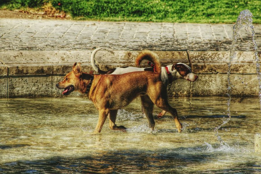 Canon 70d EyeEm The Best Shots Moment Lens My Unique Style Hdr_Collection DogLove Dog 75 -300mm