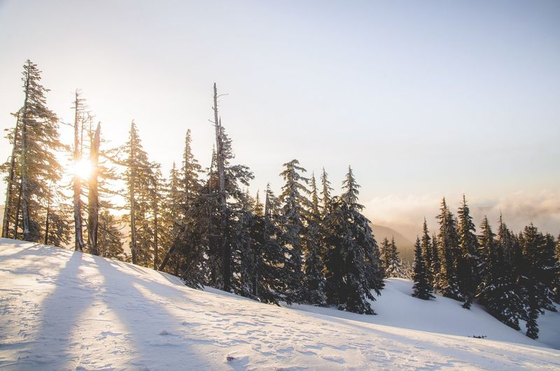 Sunrise at Mt hood. Snow Winter Cold Temperature Nature Tranquil Scene Roamtheplanet Photooftheday Beauty In Nature Tree Tranquility Pine Tree Landscape Forest Outdoors Frozen No People Sunlight Pinaceae Sky Clear Sky Mountain Exploring Nw Lifeofadventure Optoutside The Great Outdoors - 2017 EyeEm Awards