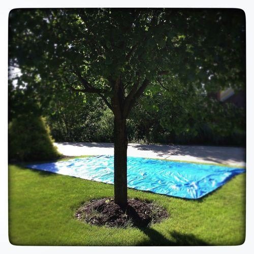 blue tarp Suburban Landscape America Lawn