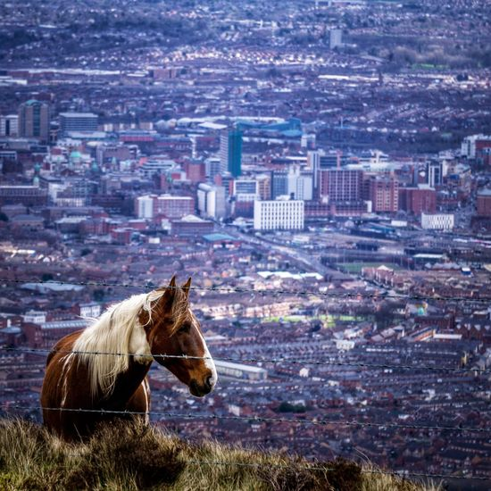 Horse in a city