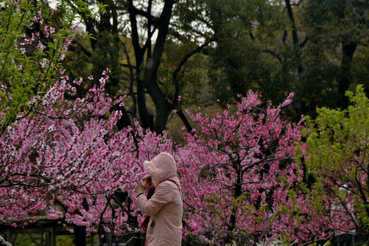 Beauty In Nature Enjoying Nature Outdoor Photography Pink Color Sakura Blossom Springtime Travel Destinations Outdoors Relaxation Travel Photography EyeEmNewHere