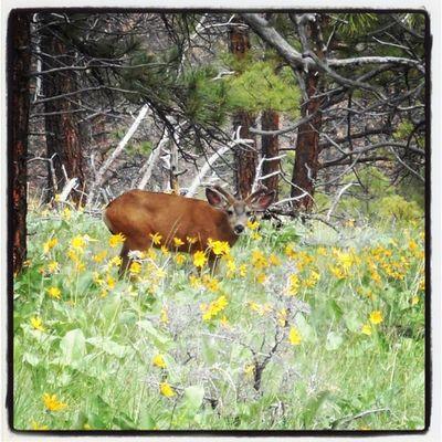 Bucky Hiking MtHelena Montana