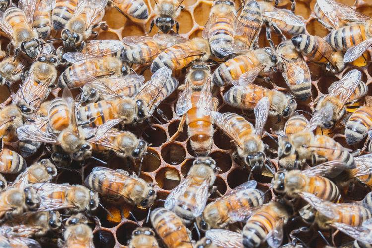 Full frame shot of honey bees on honeycomb