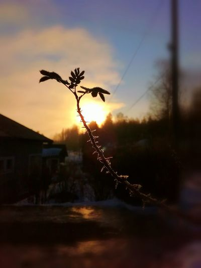 Sunrise Sunny Morning Morning Light Winter Light And Shadow Outdoor Photography Finland Nature Beauty Sky Beauty In Nature Rosé Silhouette No People Sunlight Selective Focus