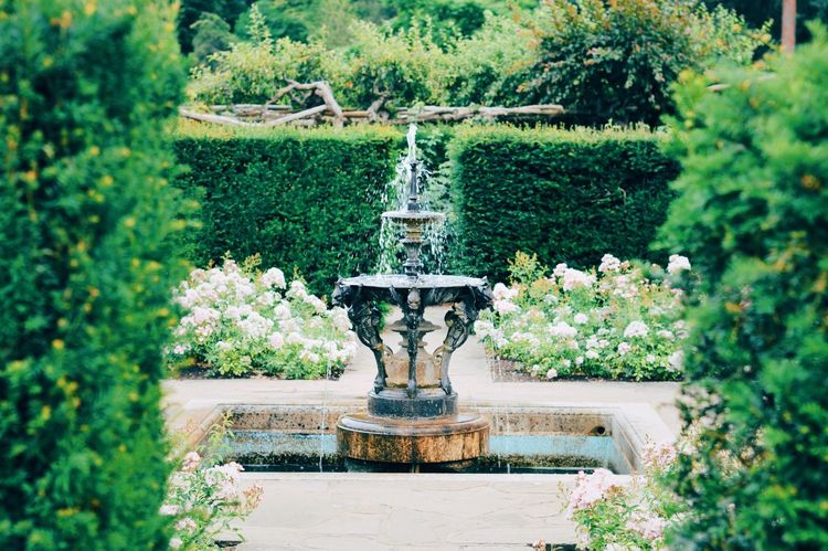 Fountain, Hever Castle Statue Sculpture Fountain Plant Art And Craft Tree Human Representation Day Water Outdoors Nature No People Growth Beauty In Nature Flowerbed VSCO EyeEm Best Shots Castle Grounds Garden Photography