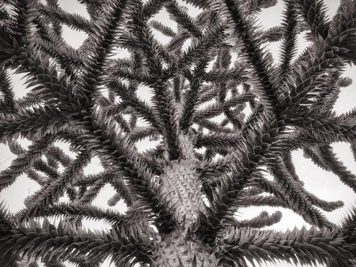 Full frame shot of palm