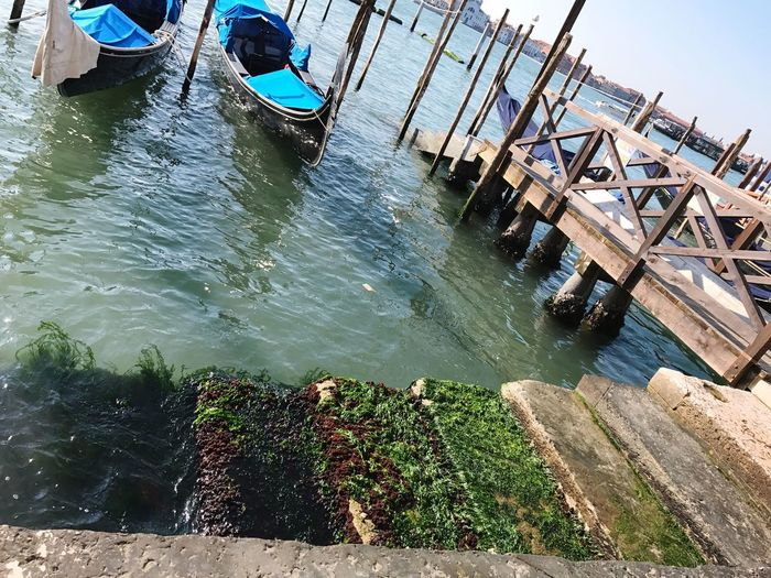 Stairs into the Channel... Mossy Stairs Moss Vessel Blue Water Venedig Stairs_collection Channel Water Architecture Nature