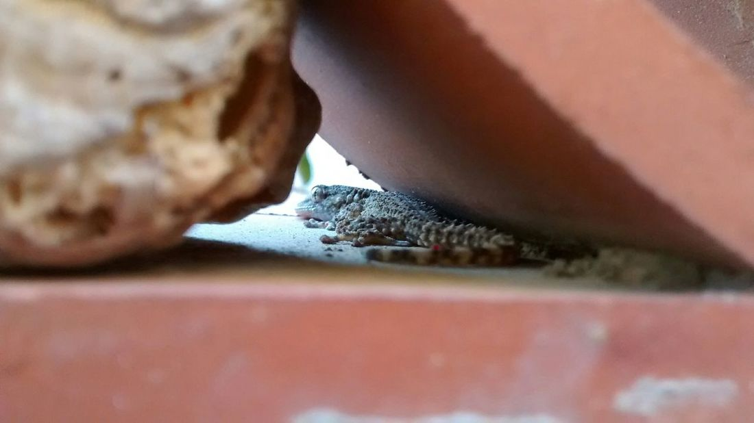 Nature Gecko Animal Nofilter Original Mobilephotography Motorola Motog Eye4photography