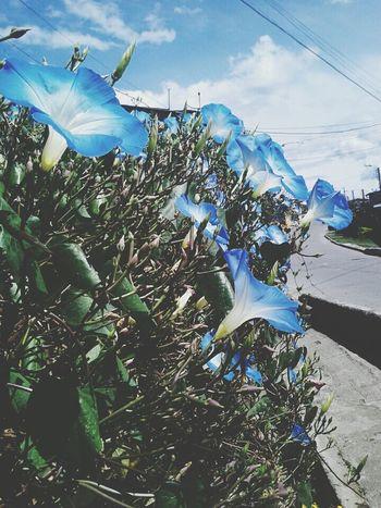 Flower Blue Frio ⛄❄ Piendamo