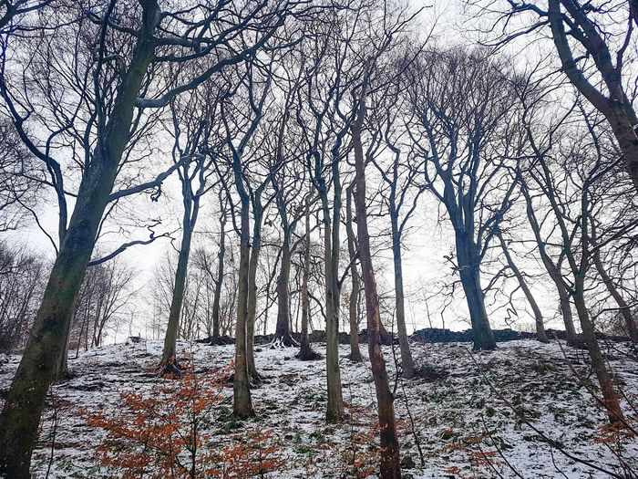 Snowy Christmas Winterwonder December Winterwonderland Snowscene Snowcovered Narnia  Landscape Yorkshire Calderdale Magical Trees Woodlands Snowy Woods Tree Low Angle View Day Nature Tree Trunk Branch Outdoors