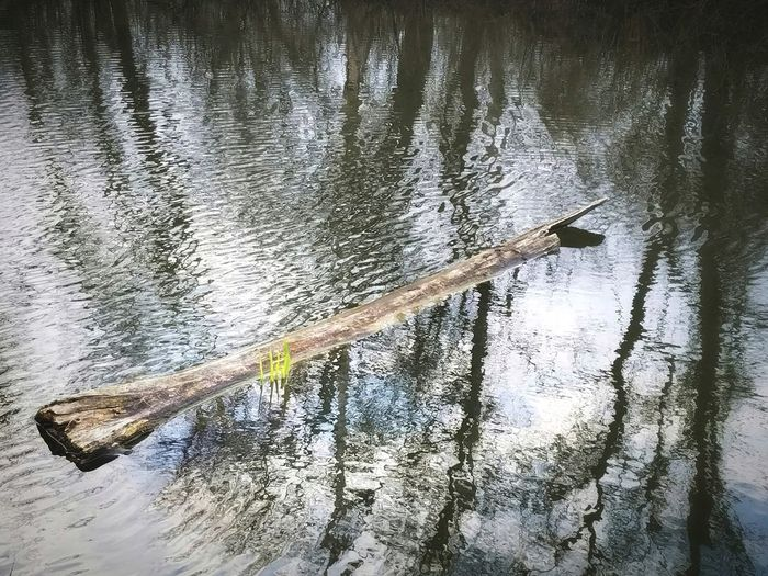 Floating Log Signs Of Spring Growth Plant Beauty In Nature Outdoors No People Daytime Fine Art Photography Textures and Surfaces Tree Reflections Rippled Water Water Full Frame Tree Lake Rippled Backgrounds Waterfront