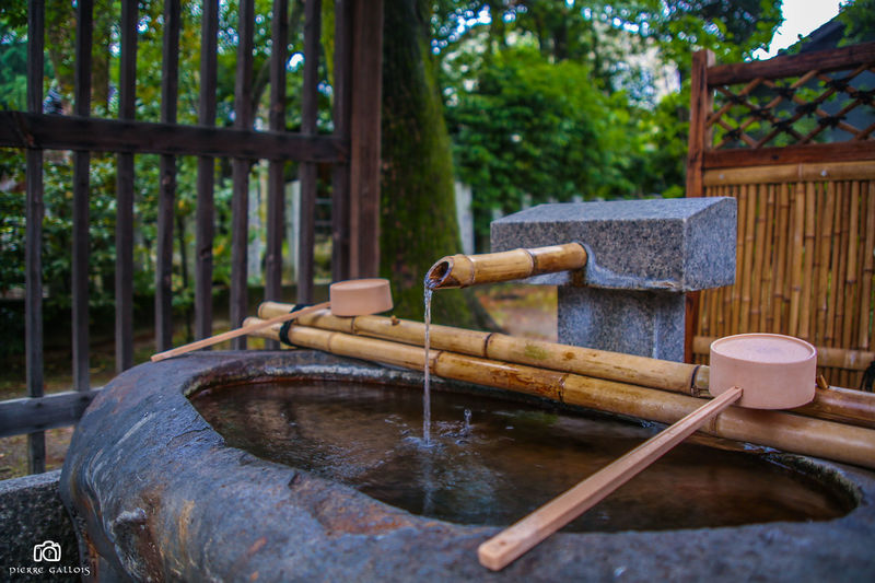 2015  Bamboo - Material Bamboo - Plant Day Drinking Fountain Fountain Japan Japan Photography Kyoto Kyoto, Japan Kyoto,japan Motion Nature No People Outdoors Running Water Shrine Travel Travel In Japan Travel Photography Wash Bowl Water Wood - Material