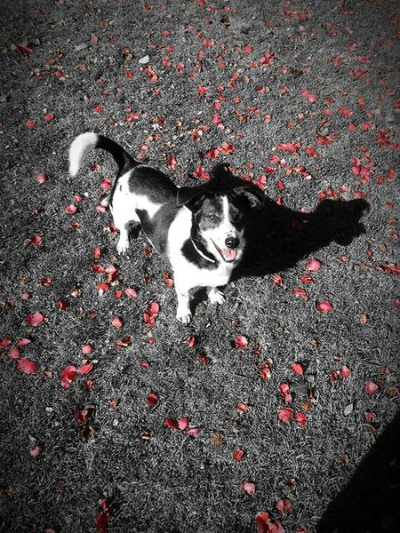 Lia Dog❤ Black & White Red Cute Pets In The Park
