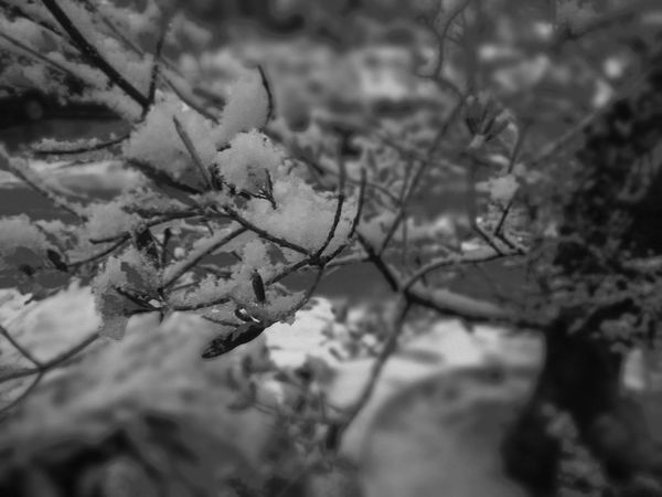 monochrome snow Leicacamera HuaweiP9 Nature Vegetable Snow Snow ❄ Monochrome France No People Nature