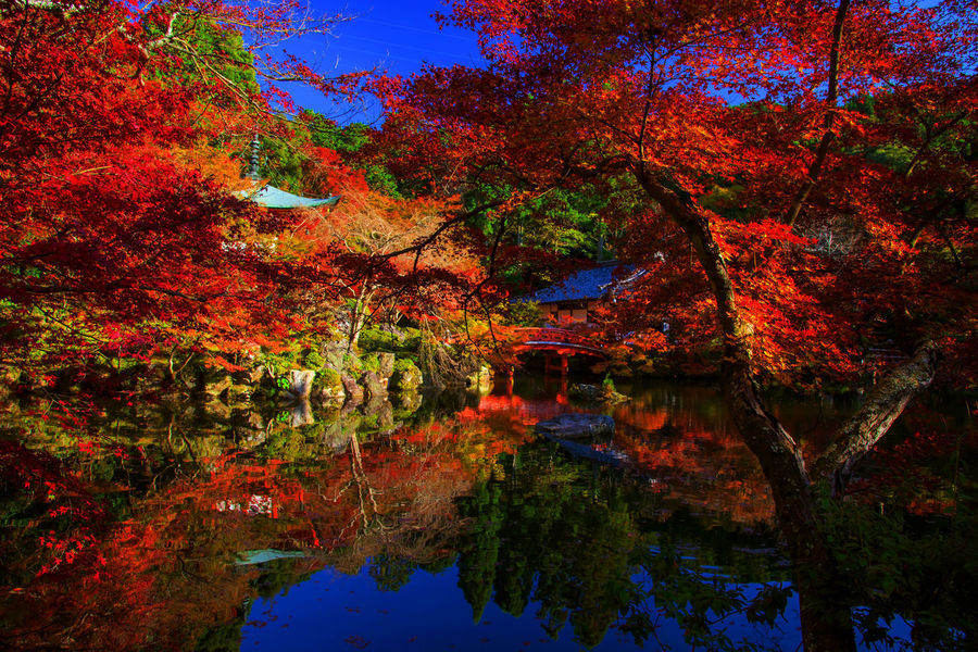Autumn foliage colors at Daigo-ji temple, Kyoto, Japan Autumn Beauty In Nature Branch Change Daigo-ji Temple Day Fall Growth Lake Leaf Maple Maple Leaf Maple Tree Nature No People Outdoors Reflection Scenics Sky Tranquil Scene Tranquility Travel Destinations Tree Water Waterfront