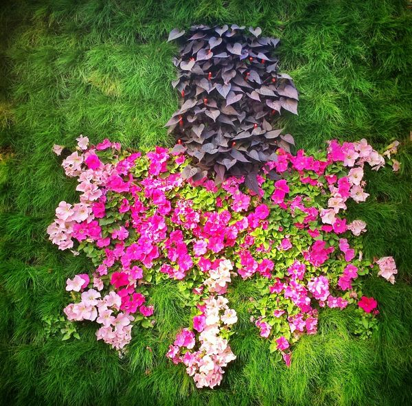Flowers Leafs Cityart Summer