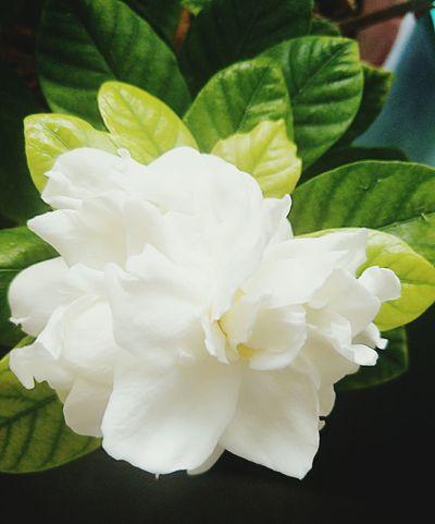 Flower Leaf Nature No People Petal Freshness