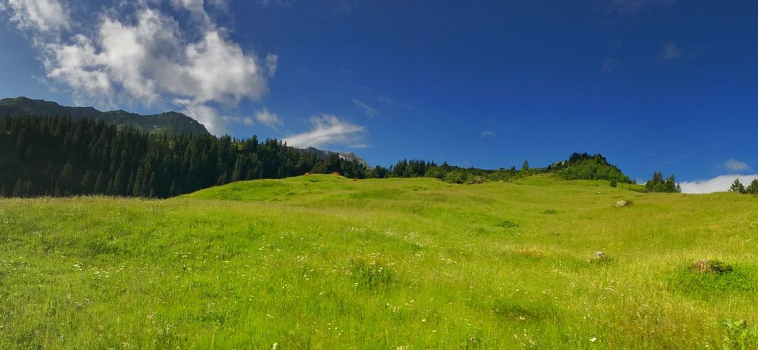 Panorama Grass Sky Green Color Plant Environment Landscape Tranquil Scene Tranquility Scenics - Nature Beauty In Nature Cloud - Sky Field Land No People Nature Tree Non-urban Scene Panoramic Day Plain
