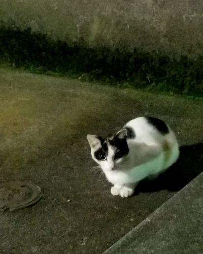 One Animal Cat Catlovers Midnight Cat Japanese Photography Tokyo Japan Kitty 子猫 猫