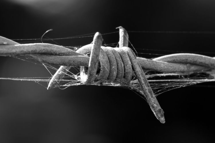 Barbed wire close-up Barbed Wire Black & White Black And White Black And White Photography Blackandwhite Blackandwhite Photography Close-up Fence Macro Macro Beauty Macro Photography Macro_collection Macrophotography
