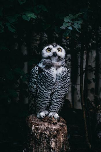 Owl perching on tree stump