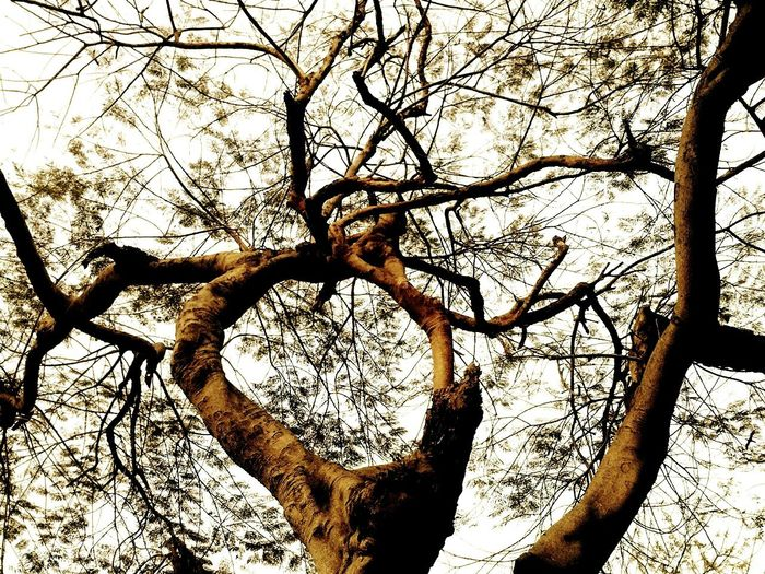 Tree Nature Confusing Just Another Shot Branches Spreading Out Eye Em Nature Lovers Nature' Diversities