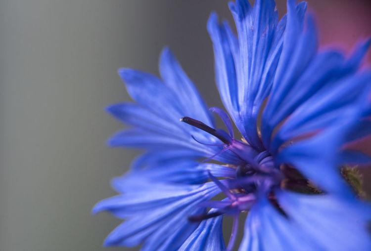 Close-up of purple blue flower