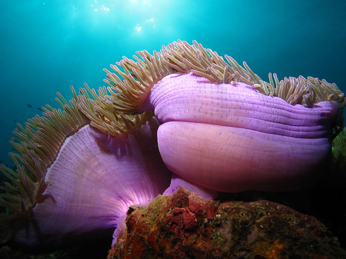 Close-up of sea anemones