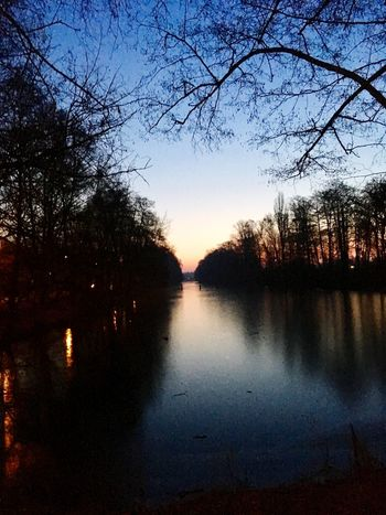 Tree Reflection Sunset Scenics Silhouette