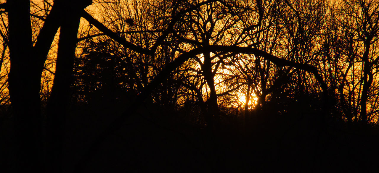 SILHOUETTE OF TREES IN FOREST AT SUNSET