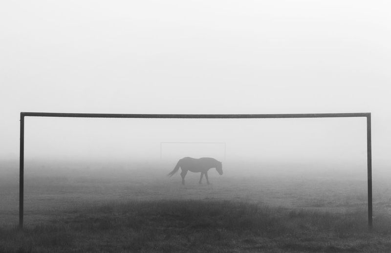 Horse standing on field against sky during foggy weather