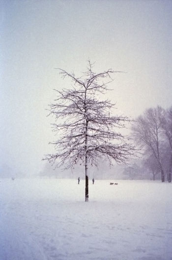 Can you feel the cold? EyeEmNewHere Analogue Photography Grunge Lowres Noise Art Bare Tree Beauty In Nature Cold Cold Temperature Extreme Weather Landscape Outdoors Plant Sky Snow Tranquility Tree Winter