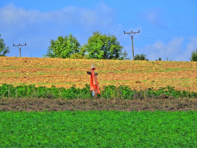 Agriculture Blue Bogey Bogy Cultivated Land Day Electricity Pylon Farm Field Grass Grassy Green Color Growth Landscape Outdoors Plant Power Line  Power Supply Rural Scene Scenics Sky Tranquil Scene Tranquility Tree